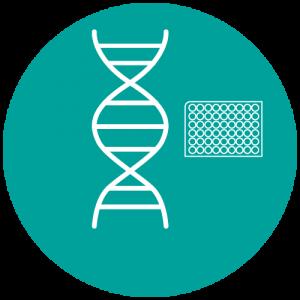 Oligos DNA en placa
